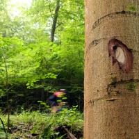 Réserve forestière d'Ellinchamps à Resteigne