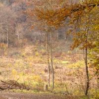 coupe forestière à l'automne