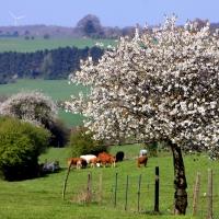 bocage agricole