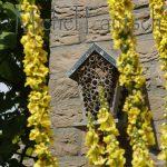 nichoir-a-insectes-et-molene-noire-lesve-07-2016